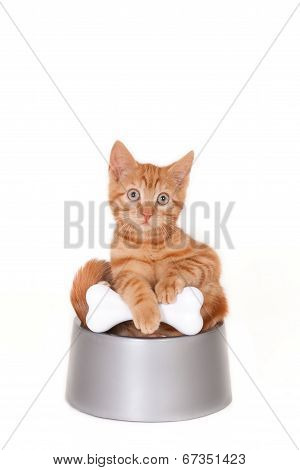Kitten in a dog's bowl