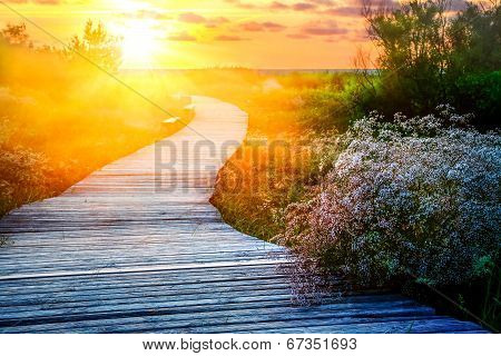 Wooden path at a beach