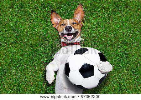 Funny Soccer Dog