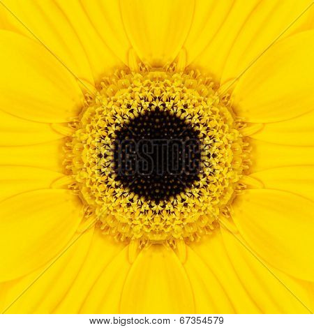 Yellow Mandala Concentric Flower Center Kaleidoscope