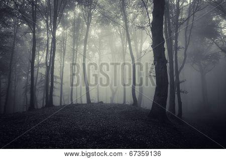 Dark eerie spooky forest on halloween