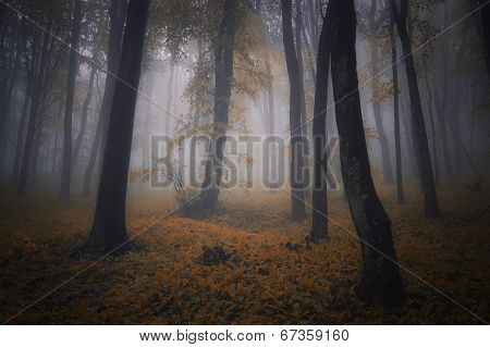 Autumn in enchanted forest with fog on Halloween