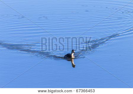 Wildlife Bird Waterhole