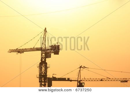 Cranes Resting On An Evening Sun