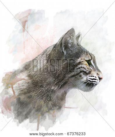 Watercolor Digital Painting Of Bobcat