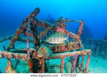Tropical fish around an underwater structure