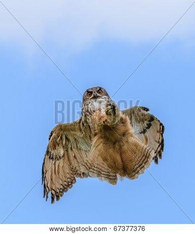 Eagle Owl Hunting In Flight