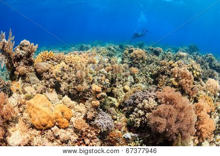 Endless Visibility - Sipadan Barrier Reef (sulu Sea)