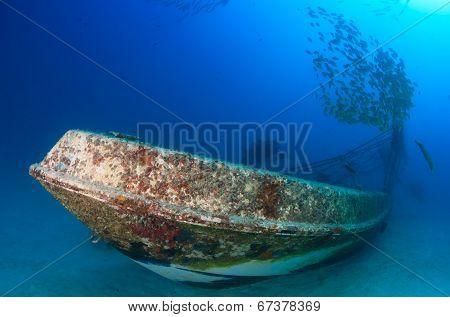 Shoal of fish near a wreck