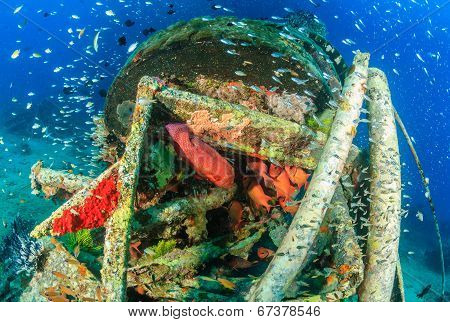 Coral grouper and glassfish
