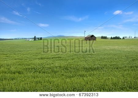 Beautiful wheat fields in Palouse, Washington state