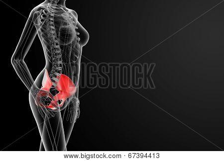 3D Render Female Hip Bone