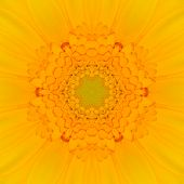 picture of kaleidoscope  - Yellow Mandala Concentric Gerber Flower Kaleidoscope Center - JPG