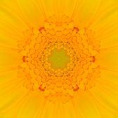 pic of kaleidoscope  - Yellow Mandala Concentric Gerber Flower Kaleidoscope Center - JPG