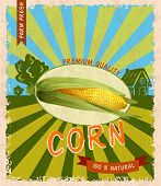 picture of corn stalk  - Retro vintage premium quality natural corn stalk advertising poster vector illustration - JPG