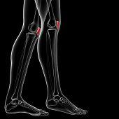 picture of knee-cap  - 3d rendered illustration of the female patella bone  - JPG