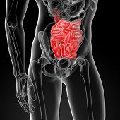 picture of small-intestine  - 3d rendered illustration of the male small intestine  - JPG