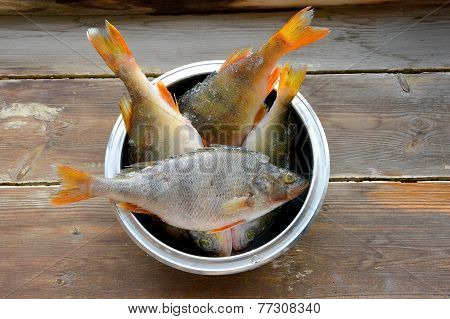 Raw perch fish in a bowl