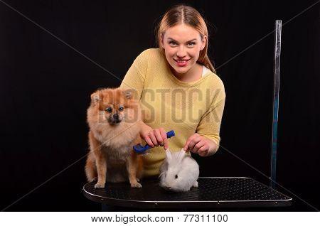 Dog And Bunny Grooming