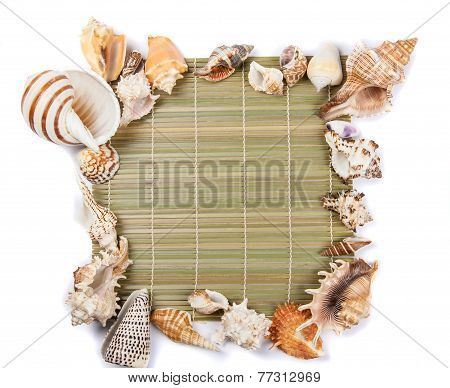 Seashells Frame Of Seashells On A White Background
