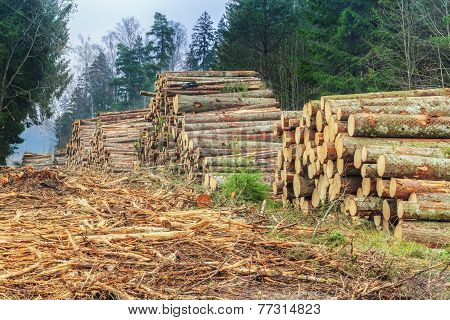 Piles of logs in the forest