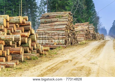 Piles of logs in the forest near road