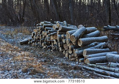 Stack Of Firewood.