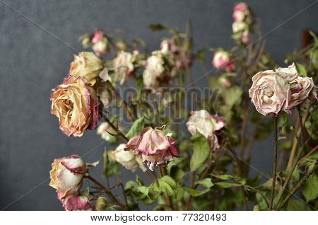 the dried roses with background