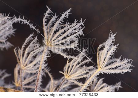 Frosty Flower Heads Under Blue Skies