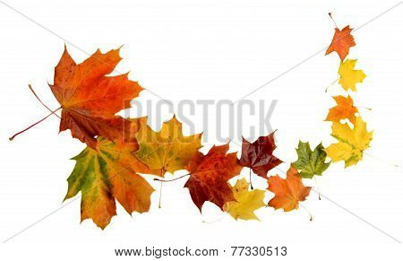 Autumn Leaves During Blizzard Isolated On White