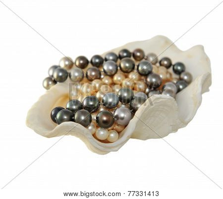Natural Pearls, Folded In Shell Isolated On White.