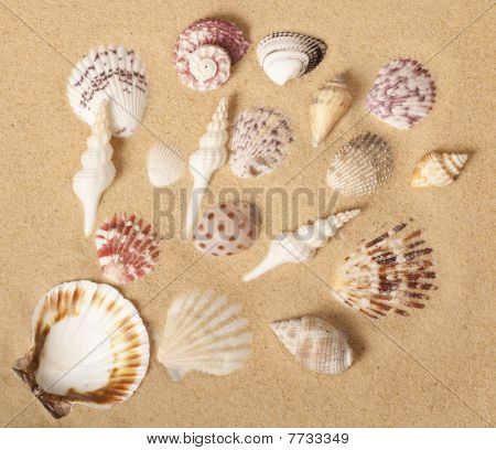 Seashell Collection Design