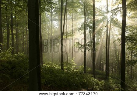 Autumn deciduous forest at dawn