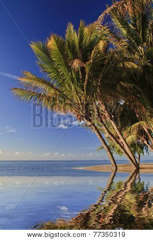 Tropical Beach With Palm Trees And White Sand. Mauritius.
