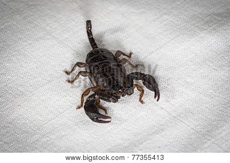 Photo of scorpion