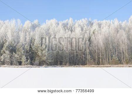 Frosty Sunny Winter Landscape.