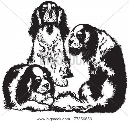 three cavalier king charles spaniels