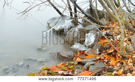 Fallen Autumn Leaves 2