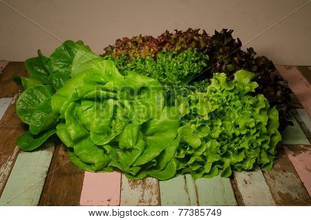 Hydroponics Vegetable On Wooden, Still Life