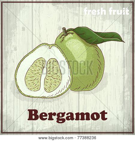 Fresh Fruit Sketch Background. Vintage Hand Drawing Illustration Of Bergamot