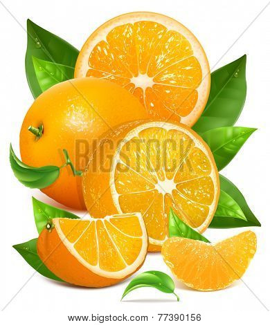 Fresh ripe oranges with green leaves and water drops. Vector illustration for your design. Packing orange juicy.
