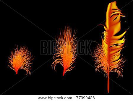 illustration with flame color feathers on dark background