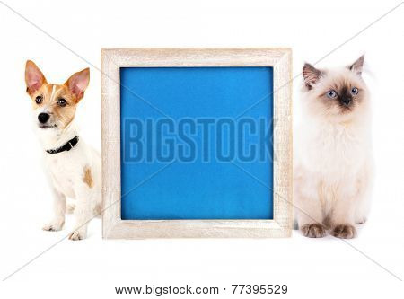 Little dog Jack Russell terrier and cat with frame isolated on white