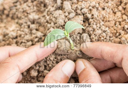 Close Up Hand Grow Young Plant