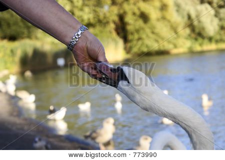 Bite the hand...
