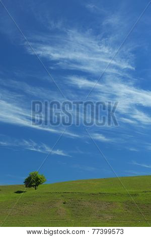 beautiful mountain landscape with a lone tree