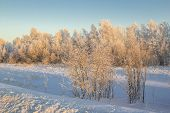 pic of siberia  - Nature of Western Siberia winter frost sketches mine 35 degrees Celsius. ** Note: Soft Focus at 100%, best at smaller sizes - JPG