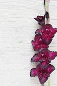 picture of gladiolus  - maroon gladiolus on a light wooden background - JPG