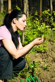 Woman Checking First Vine Leaves In Spring
