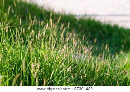 The Grass-01